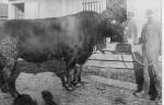 Henry Schinnerer's bull. Probably s/o Fred & Eliz (Schumm) Schinnerer. (1867-1952)