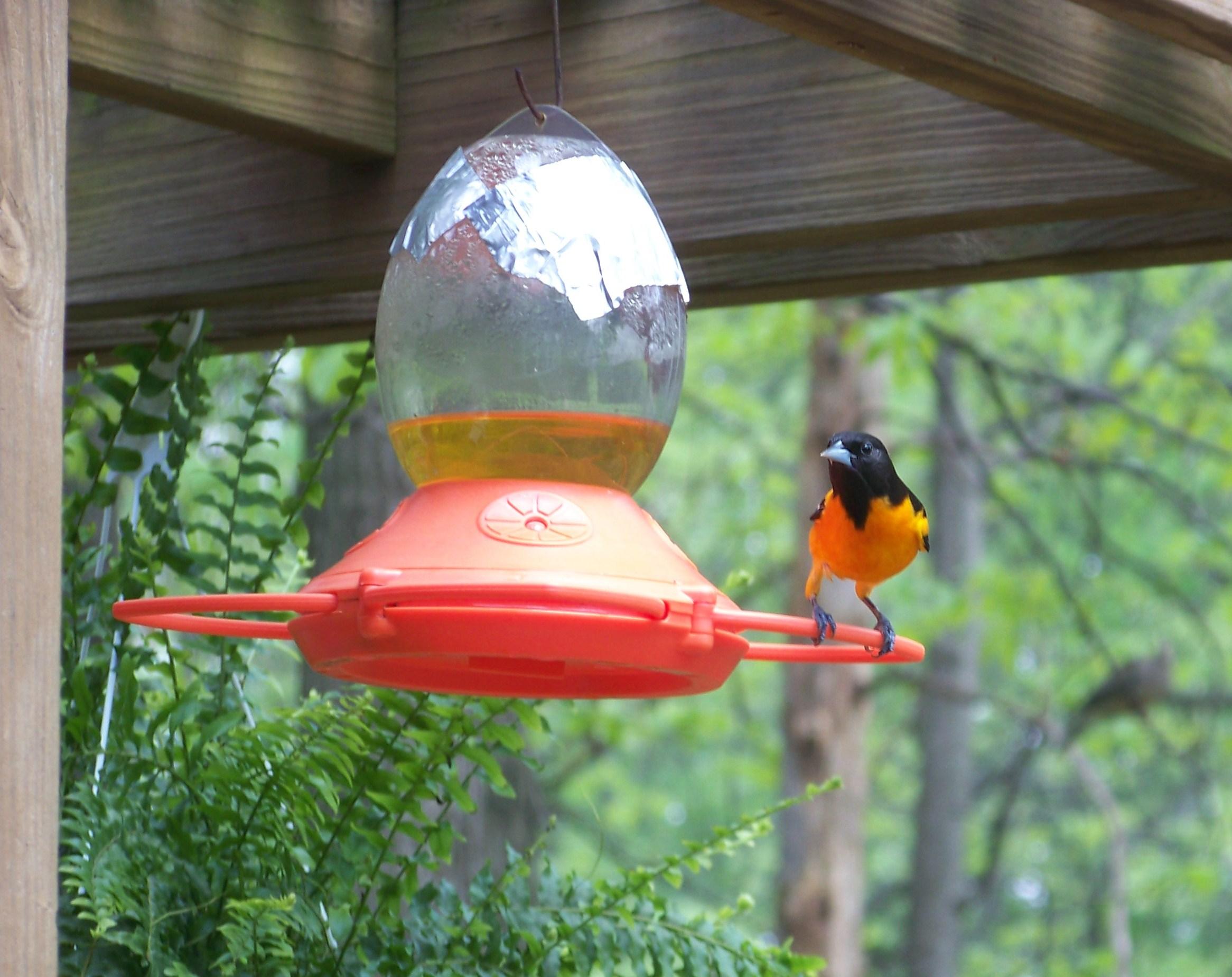 diy jelly s pin blog carolina or oriole wren mason suet rebecca jar bird best the gardens feeder