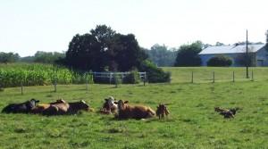 Livestock